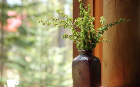カラマツの枝を花瓶に