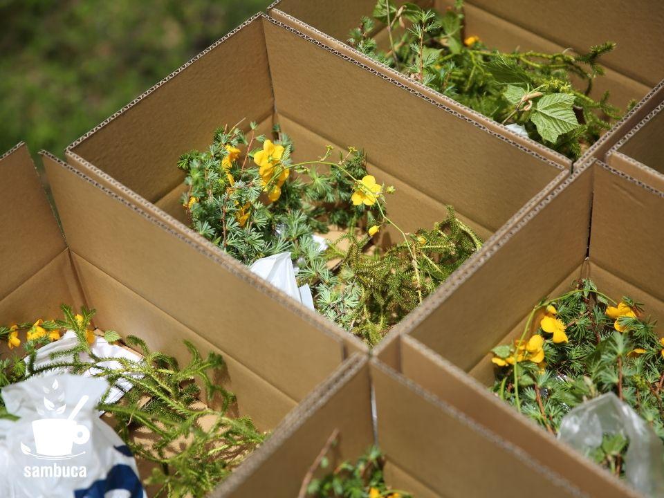 箱に入ったカラマツなどの「信州の春」