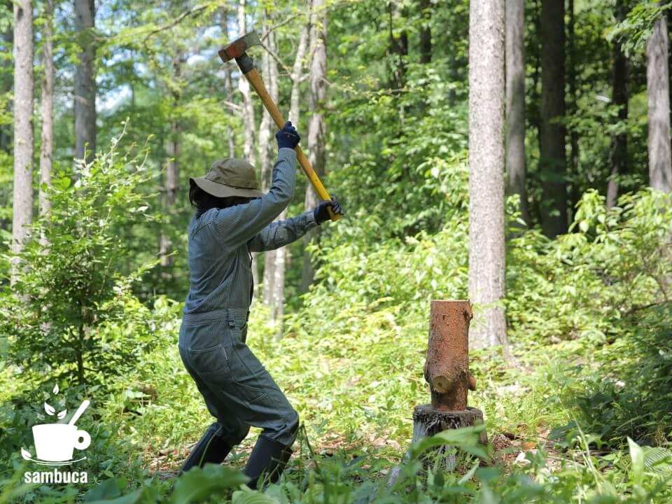 修理した斧(ハンマー)で薪割りです