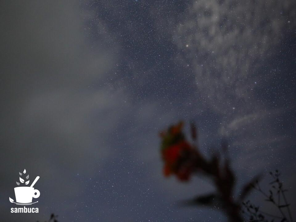 マツヨイグサと星空