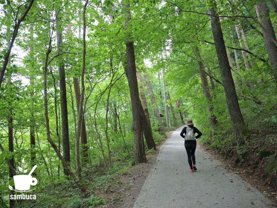 林間を散策してみました。