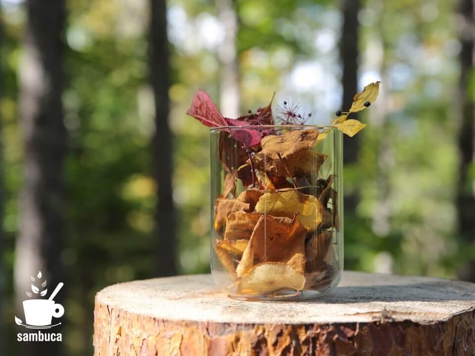 カツラの木の香り、差し上げます