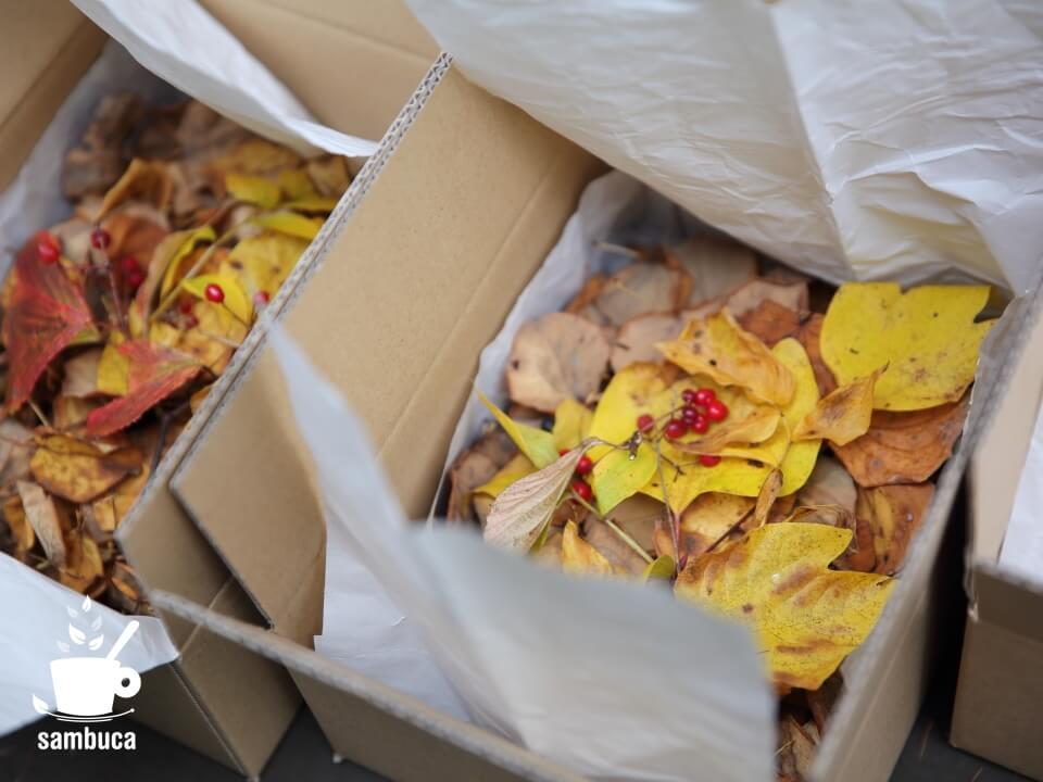 カツラの葉など、発送しました