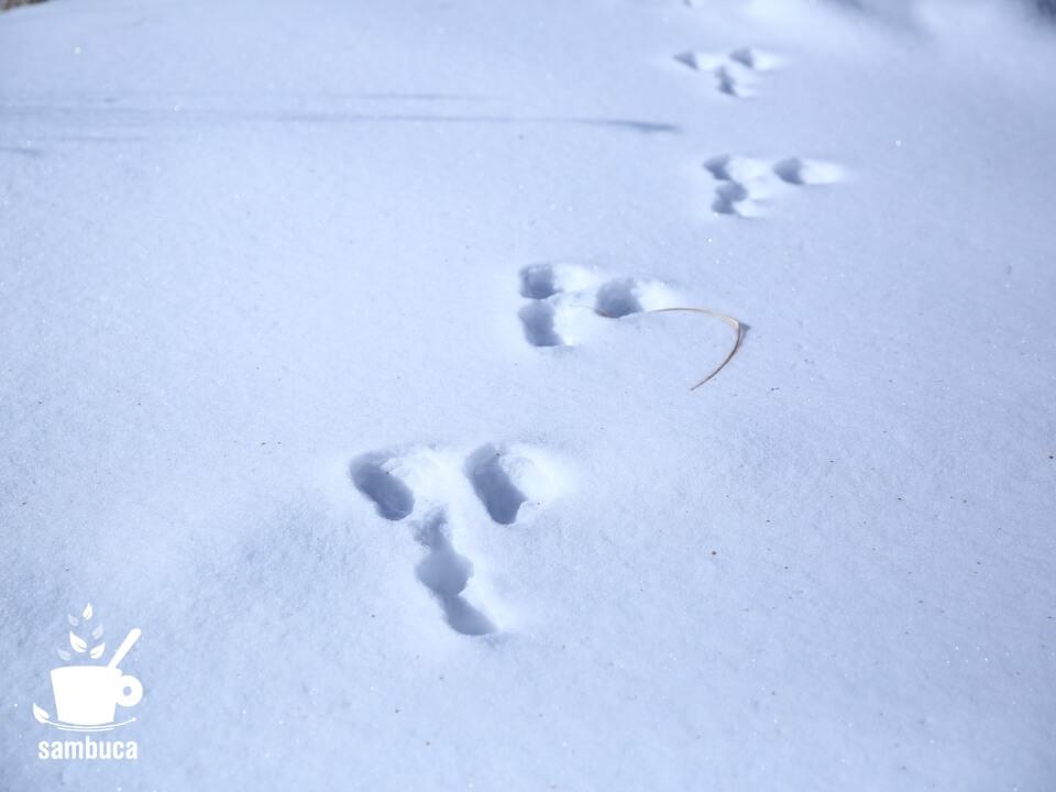 雪の上のウサギの足跡