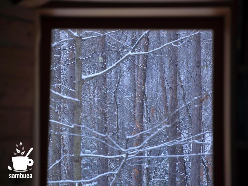 窓から眺めるカラマツ林。
