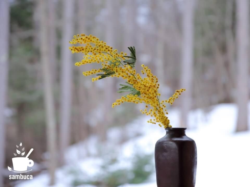 花瓶に挿したミモザ