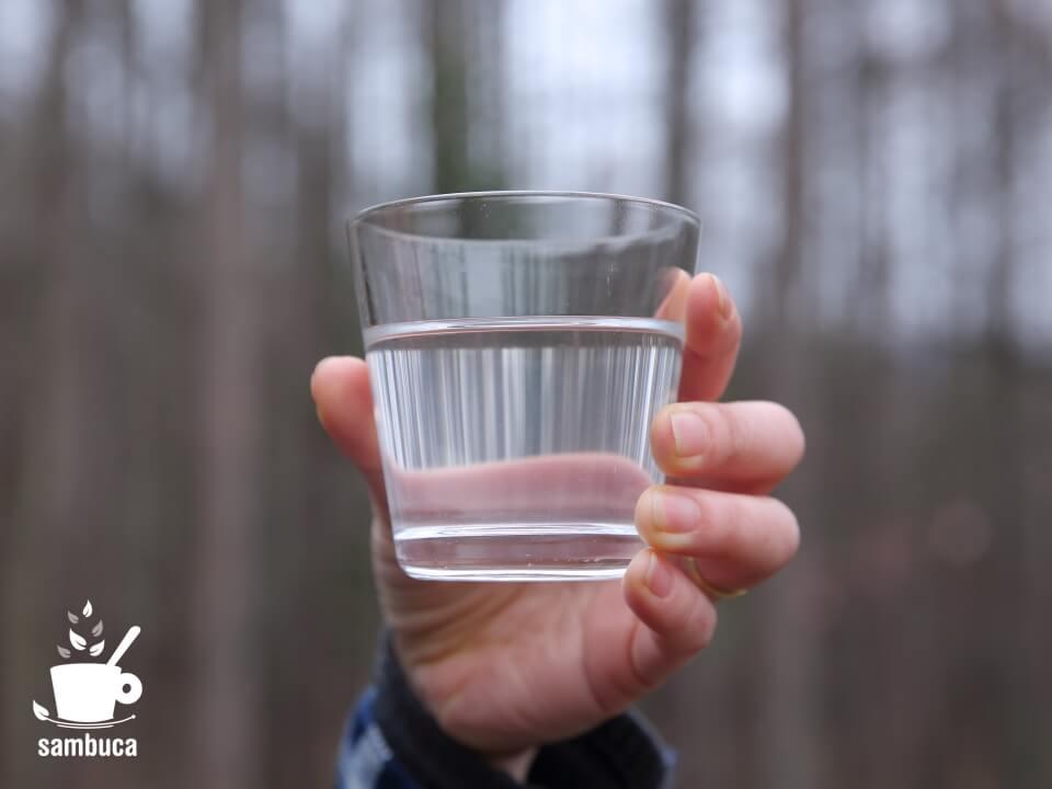 採取したシラカバの樹液
