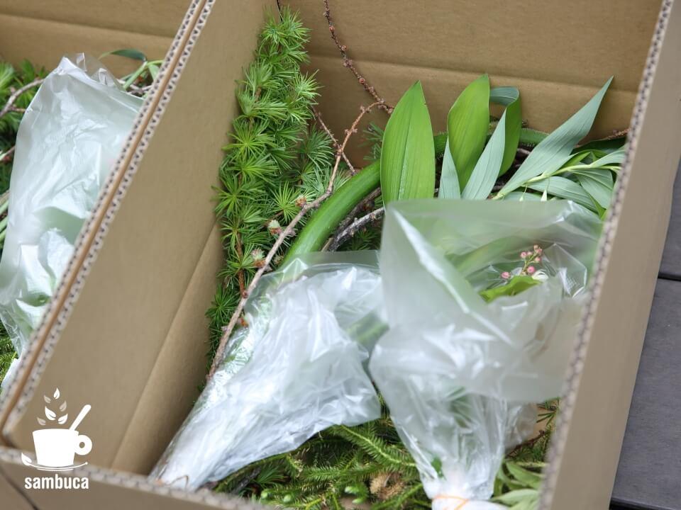 発送直前の植物たち