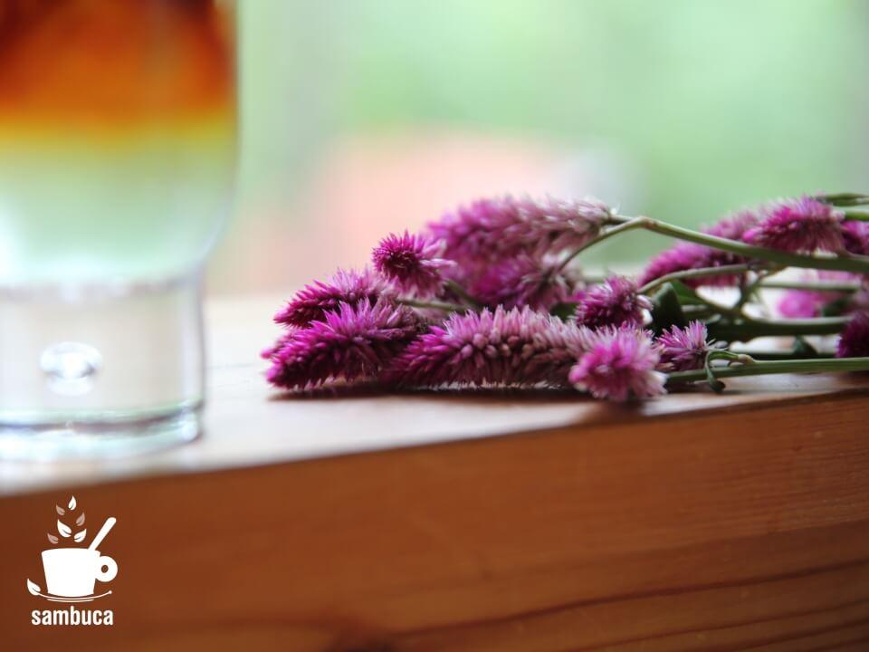 セロシア(ノゲイトウ)の花