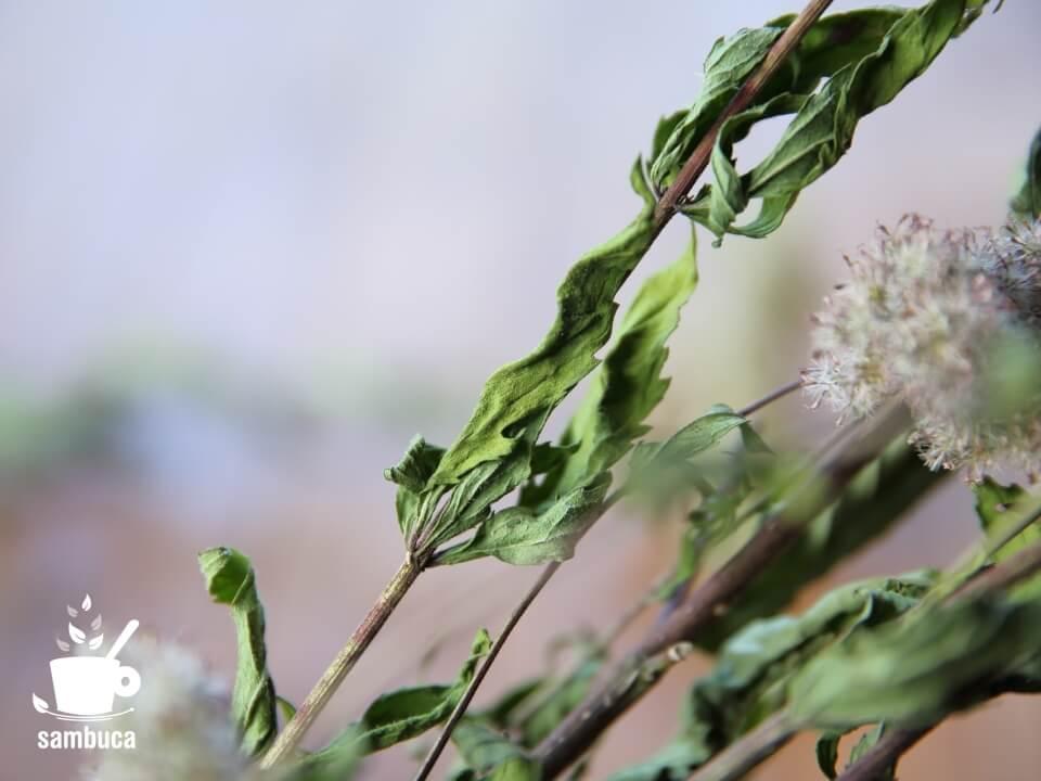乾燥させたフジバカマの葉
